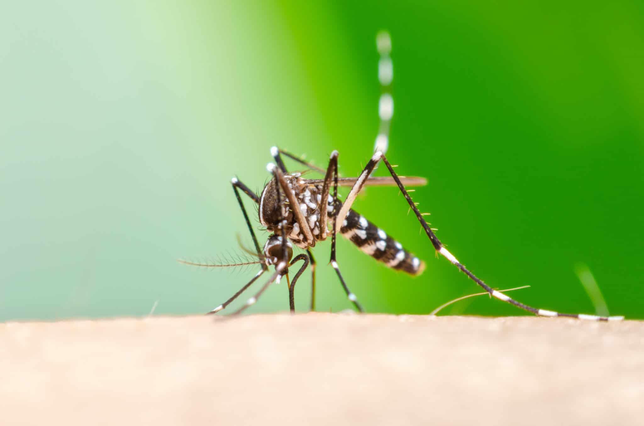 Stop mosquito bite