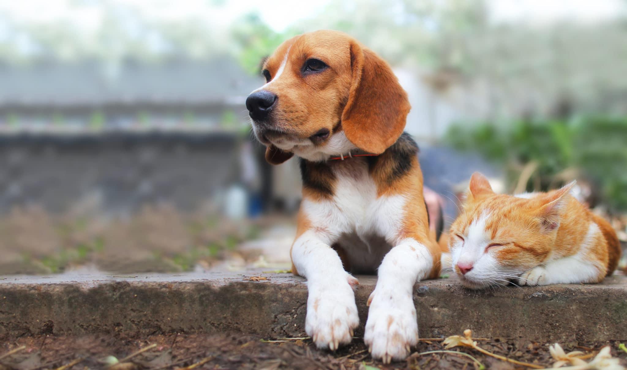 dog safe mosquito repellent and cat safe mosquito repellent