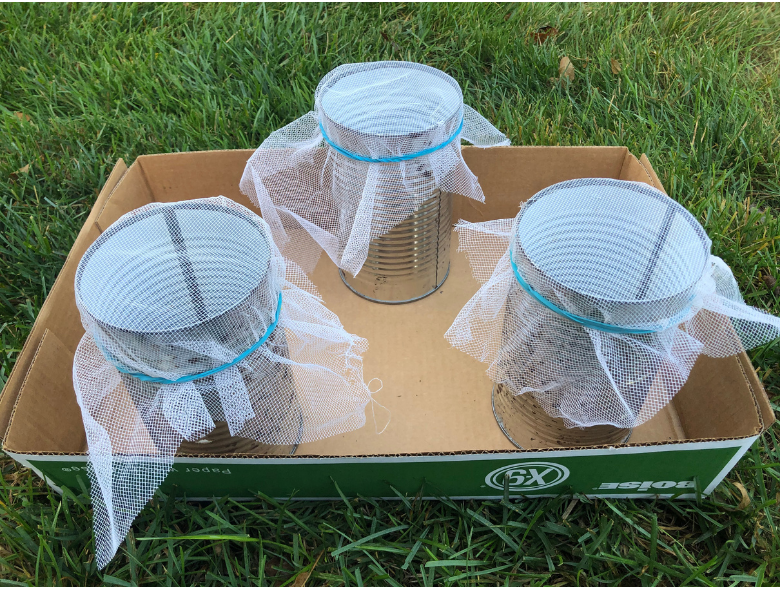 Three metal containers, two in the front are test chambers and the one in the back is the control chamber.    Each chamber is covered with a piece of crinoline to allow air exchange. Photo credit: Arkion® Life Sciences 2020