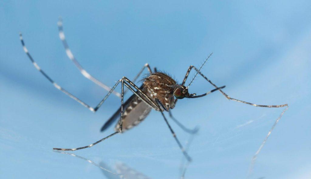 Natural mosquito control Culex tarsalis
