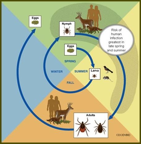 Natural Tick Control