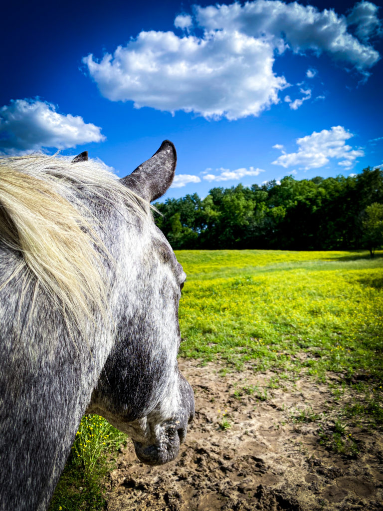 Horse looking out