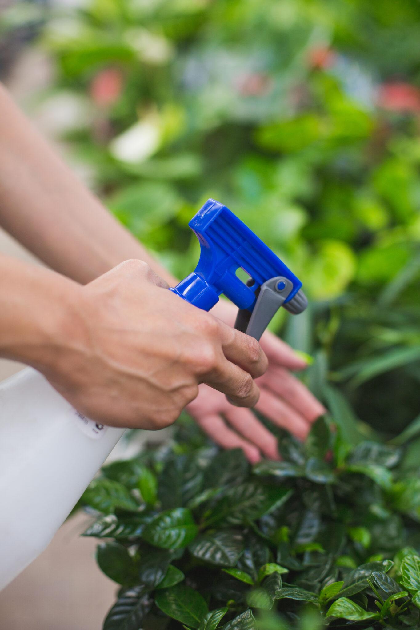 Garden sprayer in hand